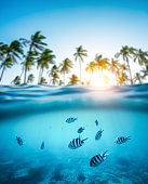 Group of zebra fishes swimming in the sea. Combined underwater and surface view. Background: Blurred palm trees on Zanzibar island (Africa),