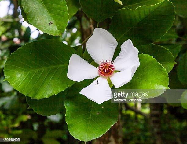 Tropical flower Singapore Botanic Gardens