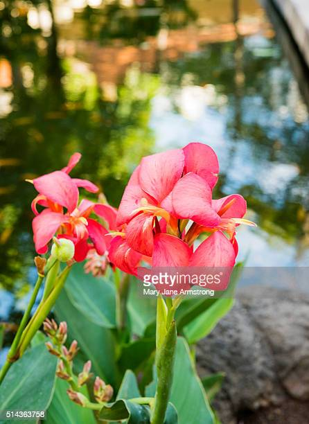Tropical Flowers of Hawaii