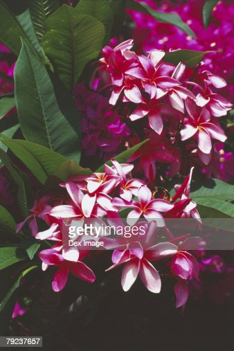 Tropical Flowers : Stock Photo