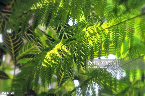 Tropical Foliage Fern Leaves Green Misty Blur