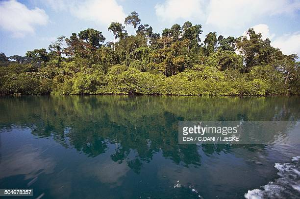 Tropical forest along the coast Andaman Islands Andaman and Nicobar Islands Union Territory of India