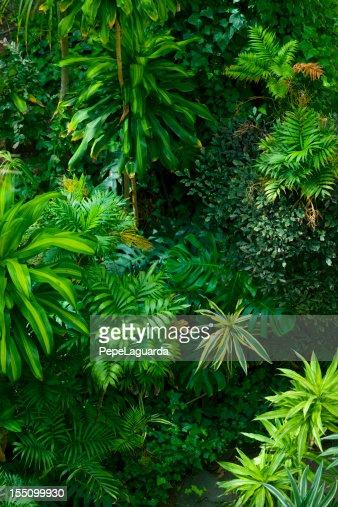 Tropical frond garden