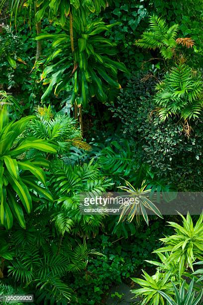 Fronde le jardin Tropical