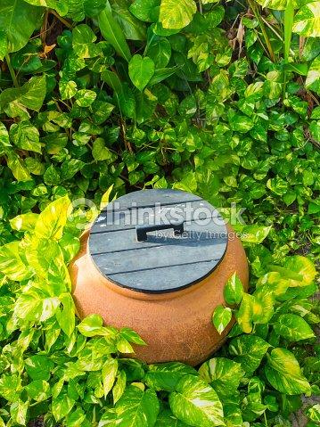 D coration de jardin tropical photo thinkstock for Decoration jardin tropical