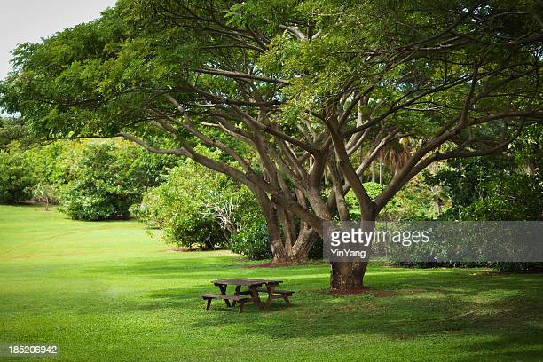 Tropical Garden with Picnic Benches
