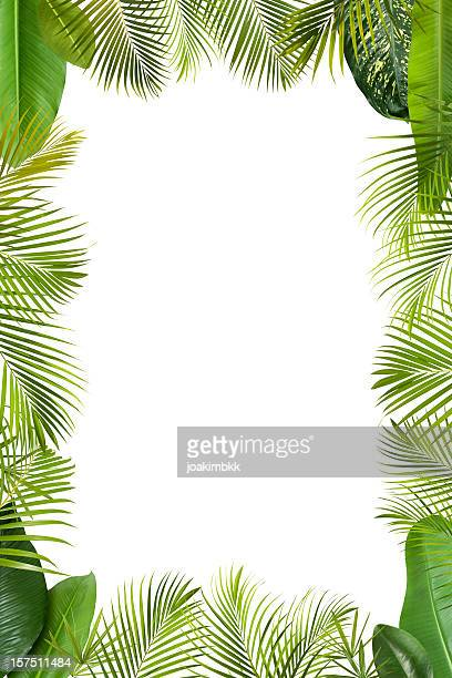 Tropical green leaves frame isolated on white with copy space