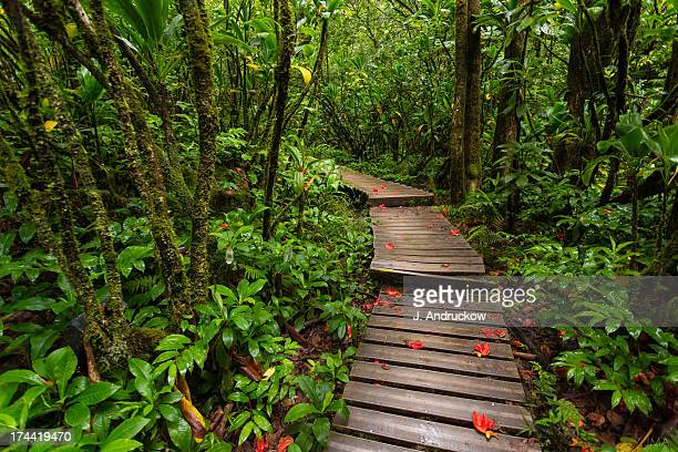 Tropical Hawaiian Forest Boardwalk