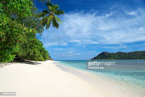 Tropical Island Beach Scene with Palm Tree and Blue Sky