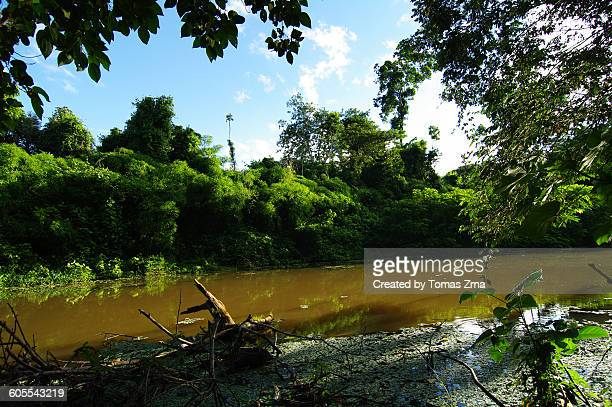 Tropical jungle of Madidi national park