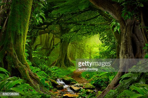 Tropical jungle : Stock Photo