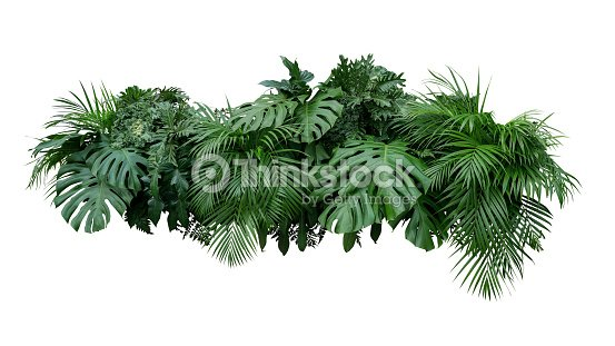 Tropical leaves foliage plant bush floral arrangement nature backdrop isolated on white background, clipping path included. : Stock Photo