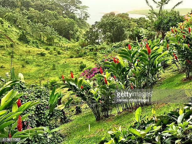 Tropical lush valleys