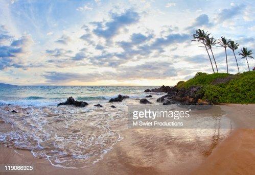 Tropical outh maui plam trees beside beach
