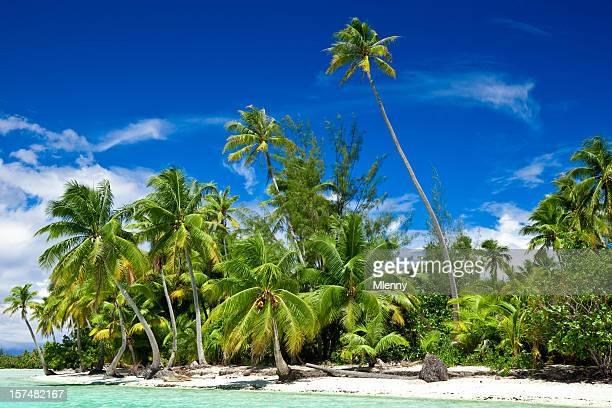 Palma tropicale spiaggia da sogno