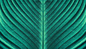 large palm leaf texture backgrounds, blue toned