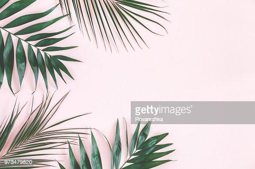 Tropischer Palmen Blatter Auf Pastell Rosa Hintergrund Flach Zu