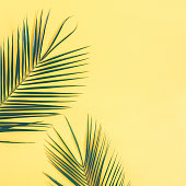 Tropical palm leaves on yellow background. Summer concept. Flat lay, top view, copy space, square