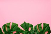 Tropical palm leaves on a light pink background. Bottom border. Minimal nature. Flat lay. Top view.