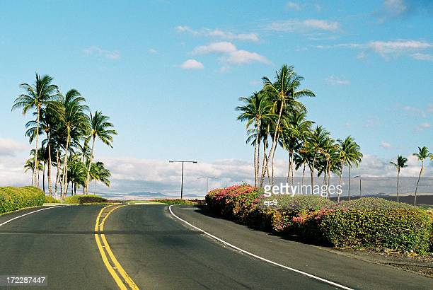 Tropical Palm tree road a Maui Hawaii resort hotel