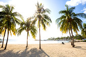 Tropical palm trees on the beach in Cayman Islands - Caribbean