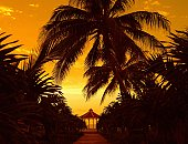 Tropical palm trees with romantic gazebo at sunset.