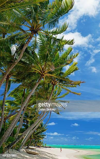 Tropical palm-fringed beach