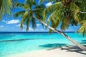 tropical paradise beach with white sand and coco palms travel tourism background concept