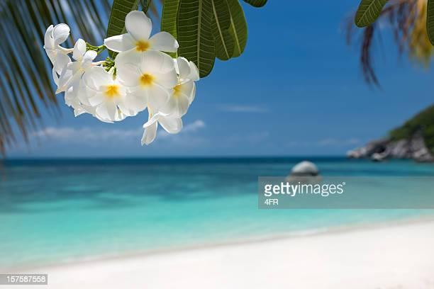 Tropical Paradise Beach (XXXL)
