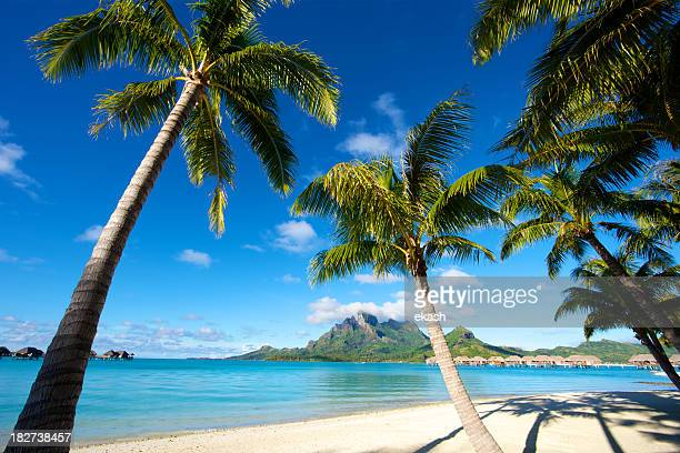 南国のパラダイスで、南太平洋