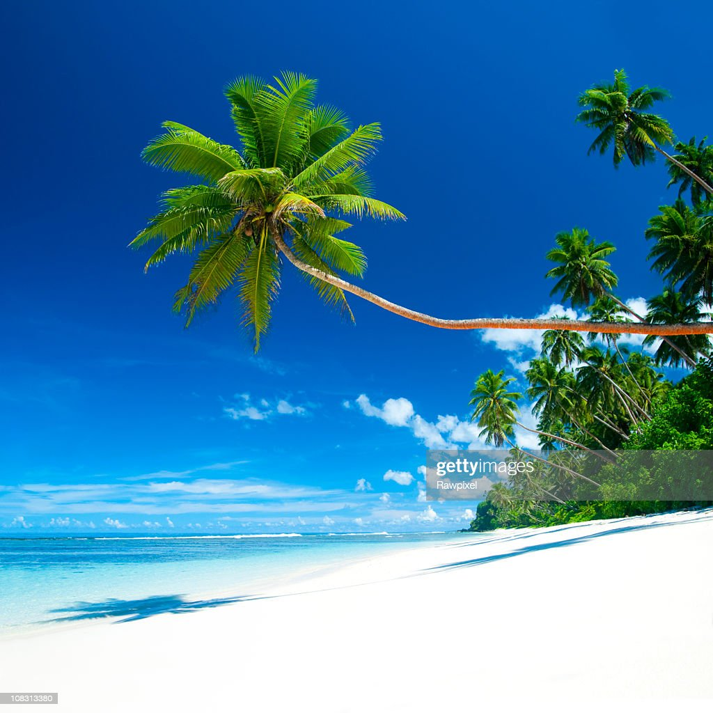 Tropical Paradise : Stock Photo