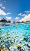 Tropical fish swimming under over the water bungalows in  French Polynesia