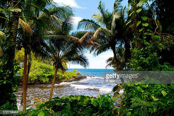 Tropical paradise with the beach, trees, and sea