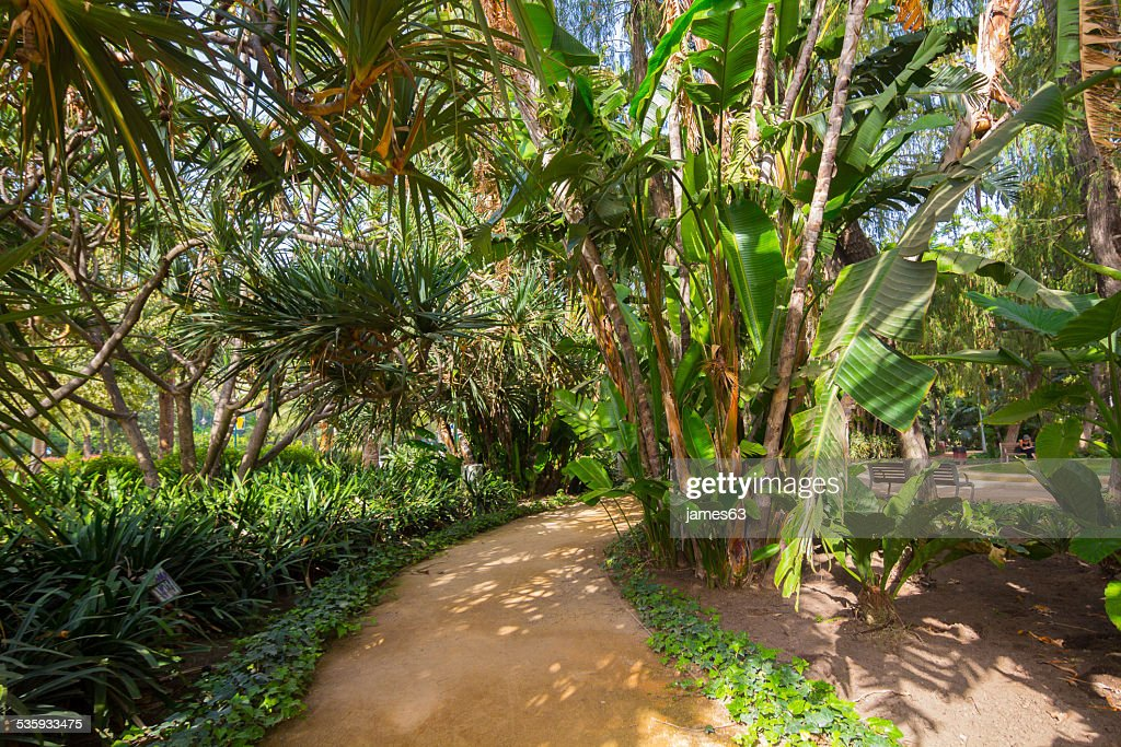 tropical park with palm trees, banana trees and other : Stock Photo