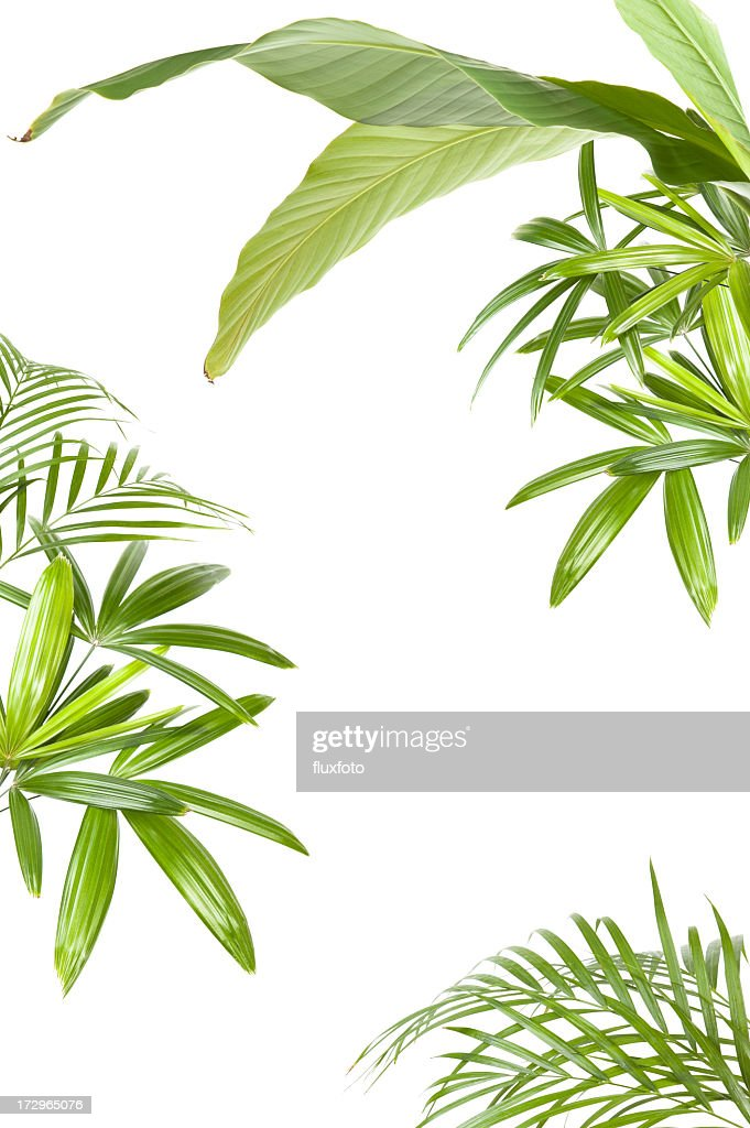 XXL Tropical plant frame