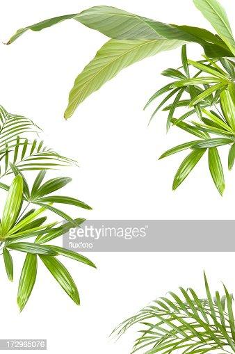 XXL トロピカル植物のフレーム