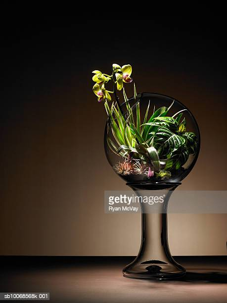 Tropical plants and orchid flower in  terrarium
