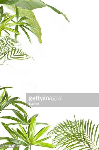 XXL Tropical plants frame