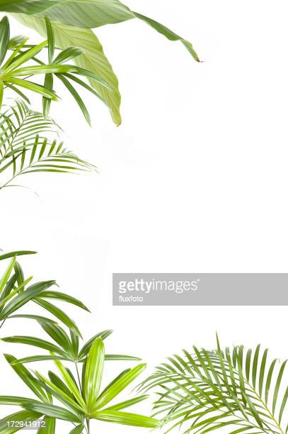XXL Tropical plants frame