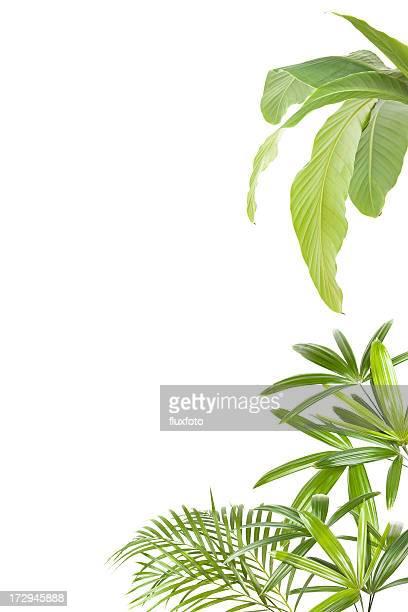 XXL plantas tropicais Moldura
