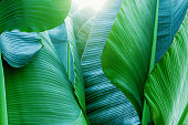 Tropical plants. High temperature and humid tropical rainforest. Image of everlasting summer. Summer resort area.