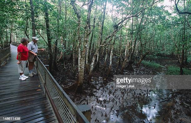 Tropical rainforest along Marrdja Botanical Walk.