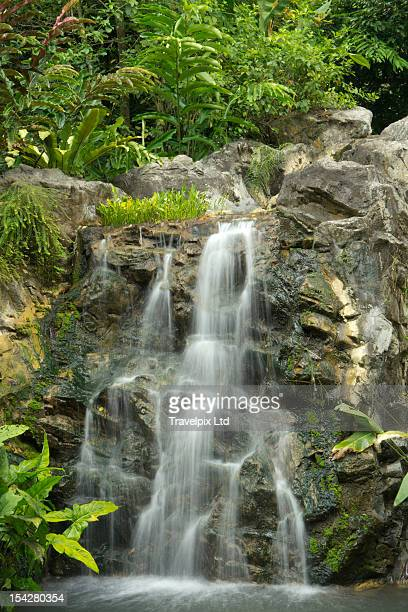 Tropical rainforest and waterfall