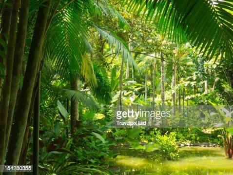 Tropical rainforest, Botanical Gardens, Singapore : Stock Photo