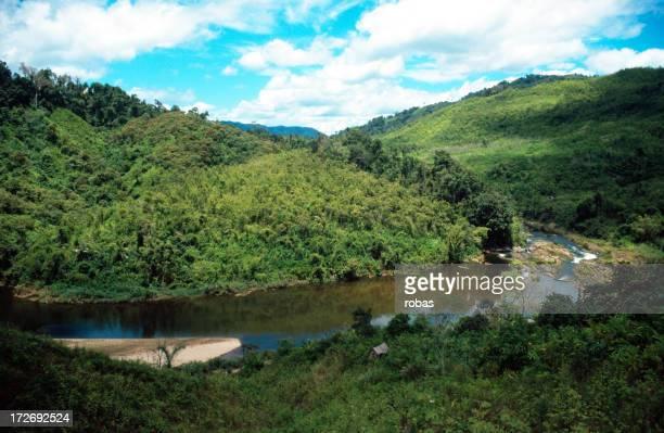 Tropical rainforest in Madagascar