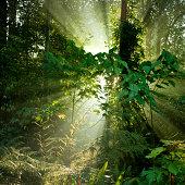 Tropical rainforests of Borneo