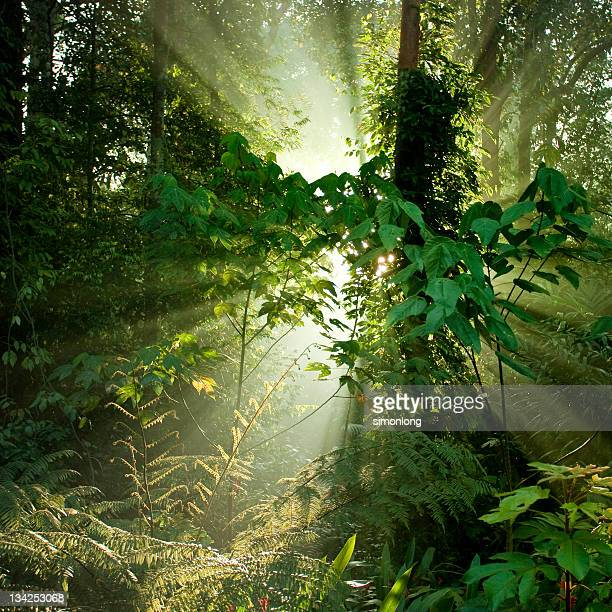 Tropical rainforests of Borneo
