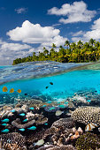 A coral reef in a tropical lagoon at Aitutaki in the Cook Islands in the South Pacific Ocean.
