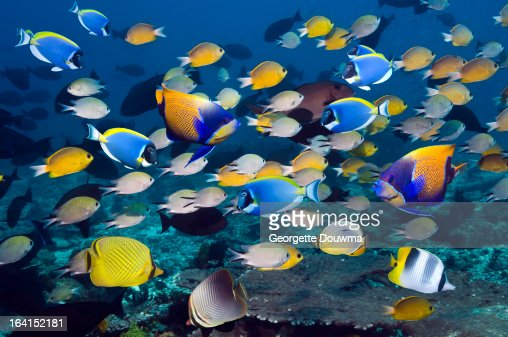 Tropical reef fish : Stock Photo
