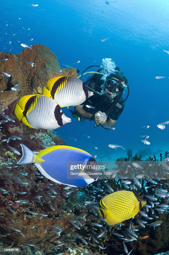 Tropical reef fish with diver